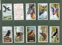 Tobacco cigarette cards British Birds 1937, Owl, Robin, & etc